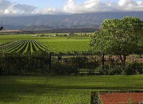 【生活】南アフリカでワインを楽しむ