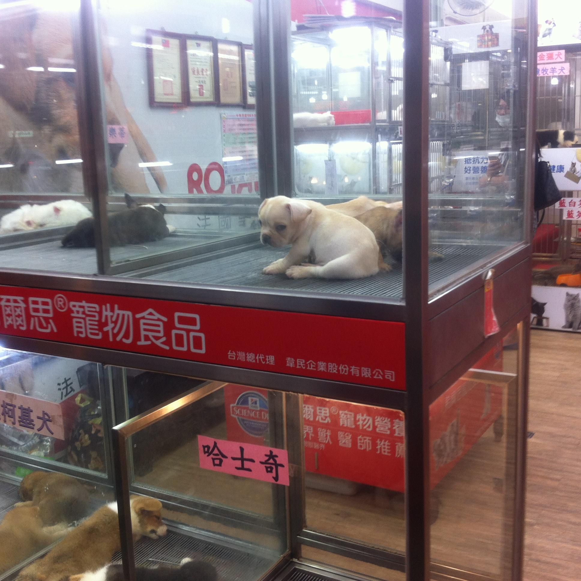 【買い物】臨江街夜市に来たならペット用品もチェック!