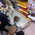台湾のコンビニには普通に犬が入ってくる!