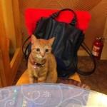 台北の猫カフェ「猫花園」