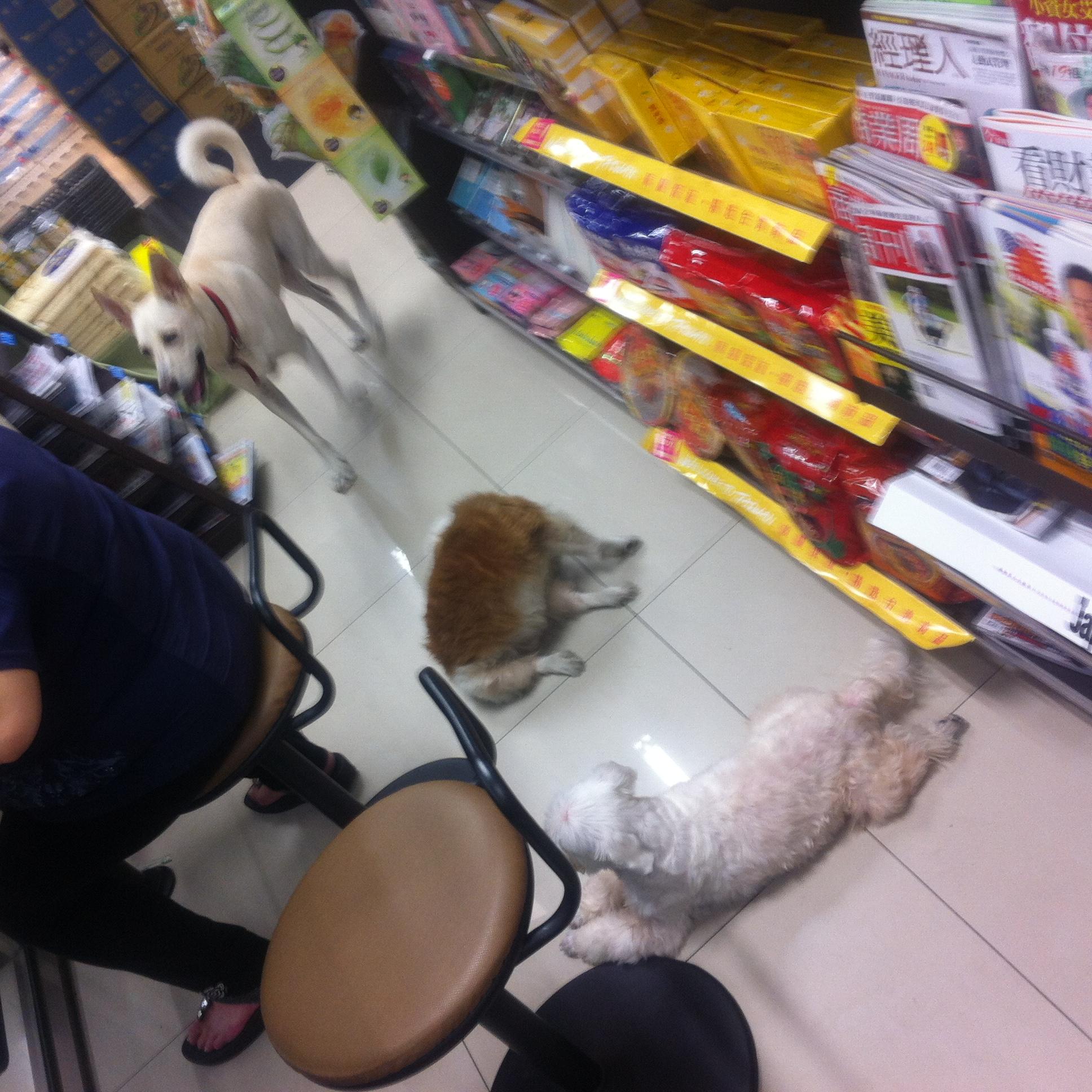 【生活】台湾のコンビニには普通に犬が入ってくる!
