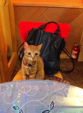 【猫好き】台北の猫カフェ「猫花園」