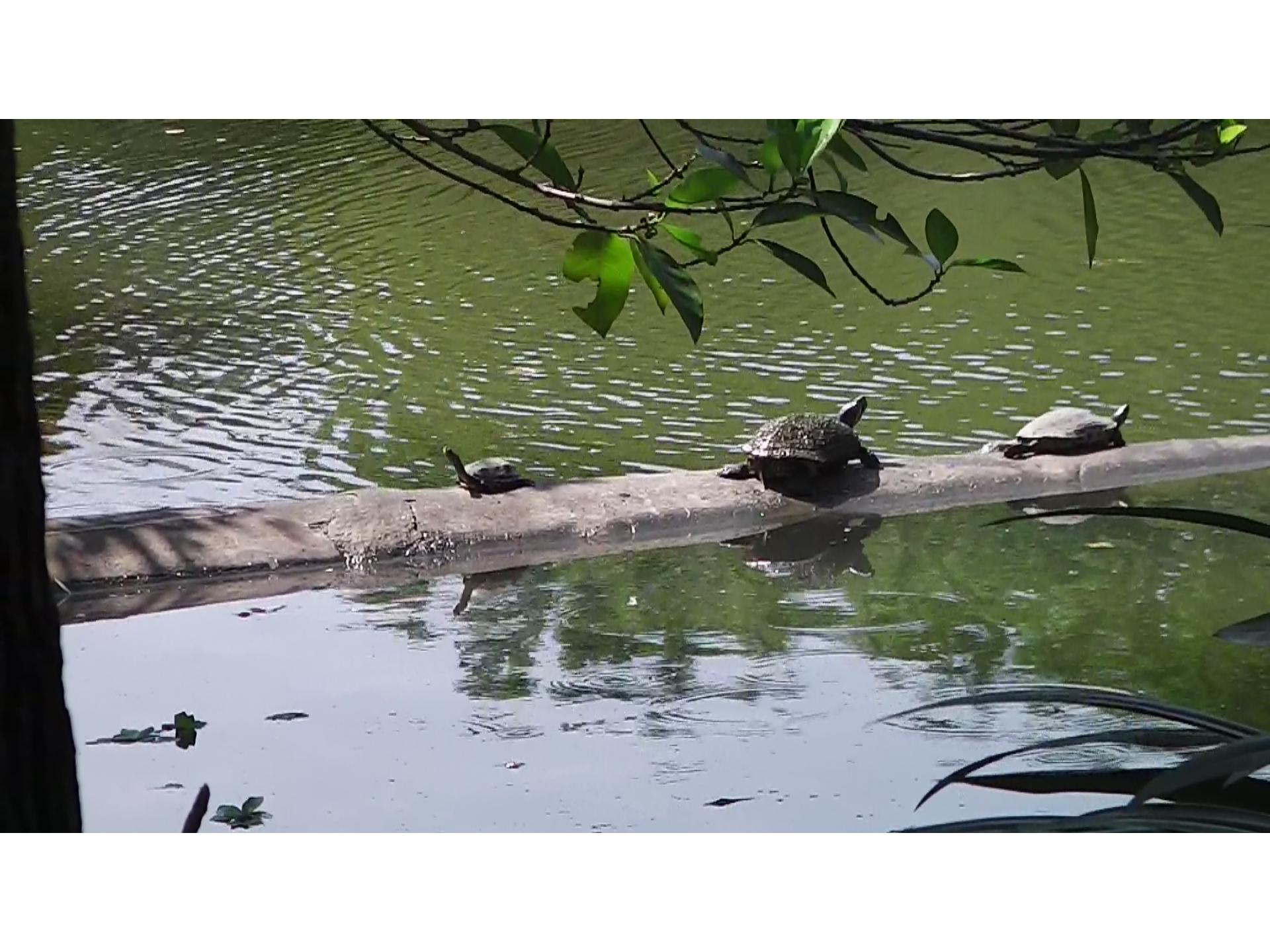【自然】台北市の大安森林公園